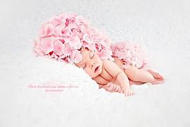 Alina Rodionova newborn photographer. Work by photographer Alina Rodionova demonstrating Baby Photography.Baby Photography Photo #43524